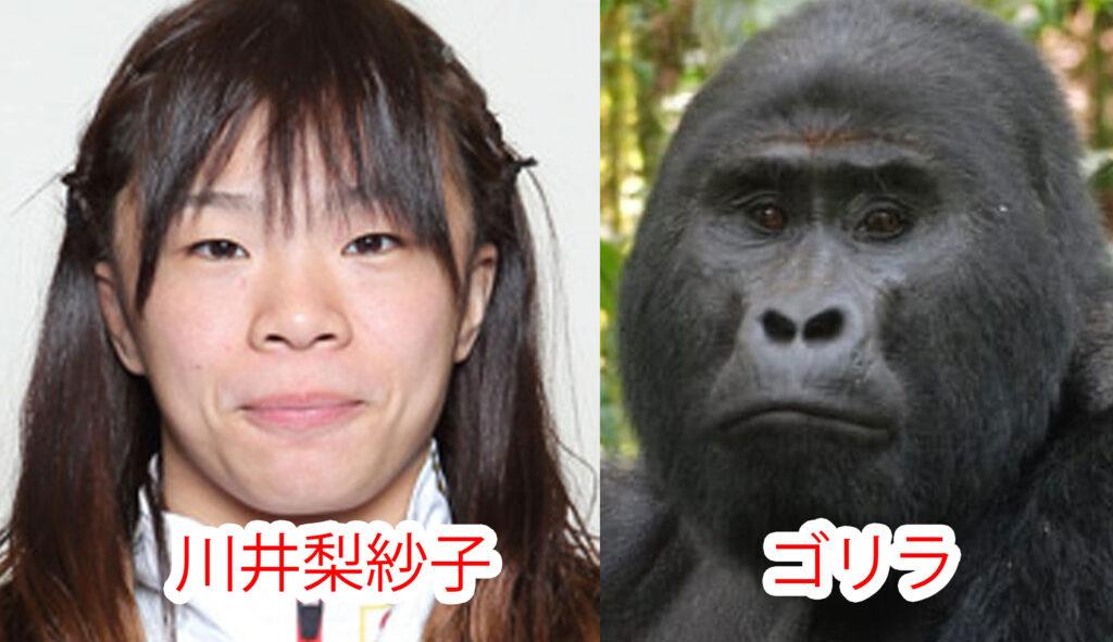 ゴリラと川井梨紗子の比較画像